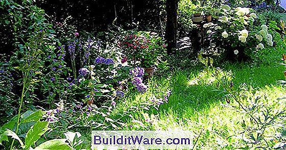 schatten pflanzen str ucher n tzliche hinweise zu. Black Bedroom Furniture Sets. Home Design Ideas